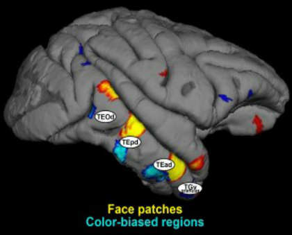 The image shows the locations of the brain at work.