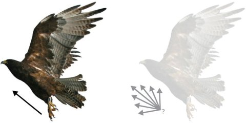 This illustration shows a bird flying.