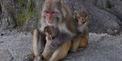 scientists probes primate behavior to determine link to humans Anthropologist discovers religious behavior in primates anthropologist discovers religious behavior in primates can scientists actually determine that our.