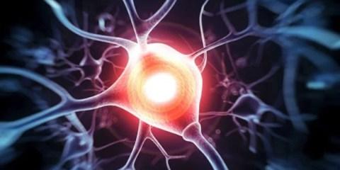 The image show a neuron.