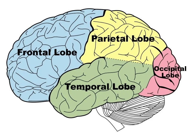 Researchers Identify Possible Physiological Cause Of Brain