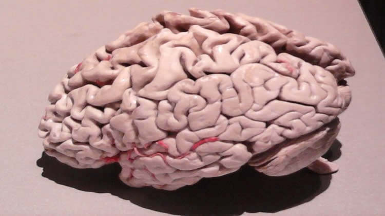 Blood Pressure Drugs Could Reduce Cell Damage Linked to Alzheimer's Disease