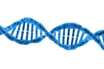 Image of a DNA doube helix.