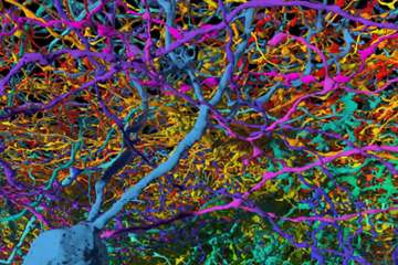 Image shows neurons from EyeWire.