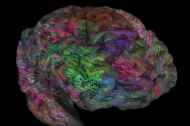 This image shows a brain with words written on it.
