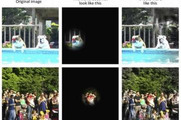 Photos used in the researchi including a group of people and a dog in a swimming pool.
