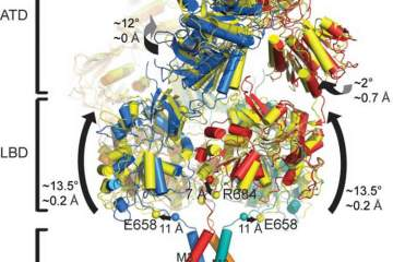 Image shows the structure of the NMDA receptor.