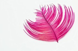 Image shows a pink feather.
