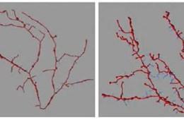 Image shows neurons at1.