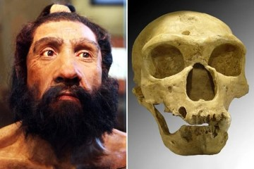 Image shows a skull and a model of a neanderthal man's head.