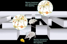 Image shows mice in a maze.