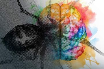 Image shows a brain and a spider.