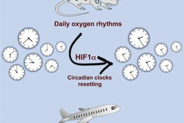 Image shows a mouse, clock and jet.