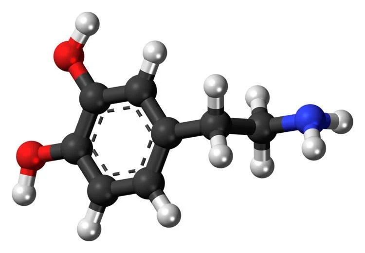 Image shows the structure of the dopamine molecule.