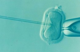 Image shows a human egg being artificially fertilized.