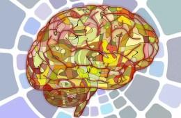 insular cortex Archives