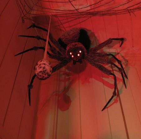 mourning rose manor spider with egg sack