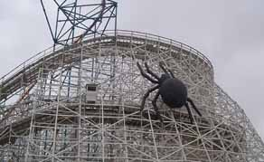 spider on coaster
