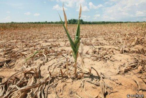 糧食危機是未來全球即將面臨的問題之一。 圖片來源:地球圖輯隊