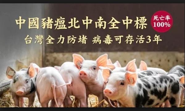 中國豬瘟已擴散,致死率百分百。 圖片來源:看中國