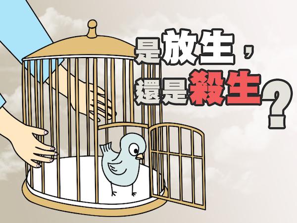 宗教團體放生,可能造成殺生或生態浩劫。 圖片來源:香港電台「通識網」