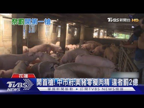 台中市政府自訂法規,美豬零瘦肉精違者罰兩億。 圖片來源:TVBS