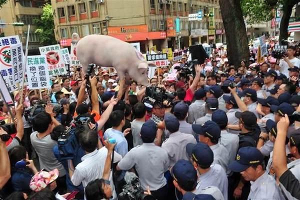 美豬與日本食品進口爭議持續中。 圖片來源:中時電子報