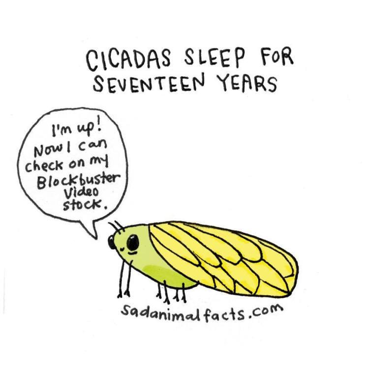 Sad-Animal-Facts-Cicadas