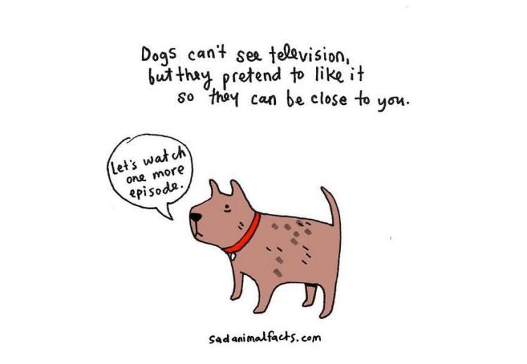 Sad-Animal-Facts-Dogs