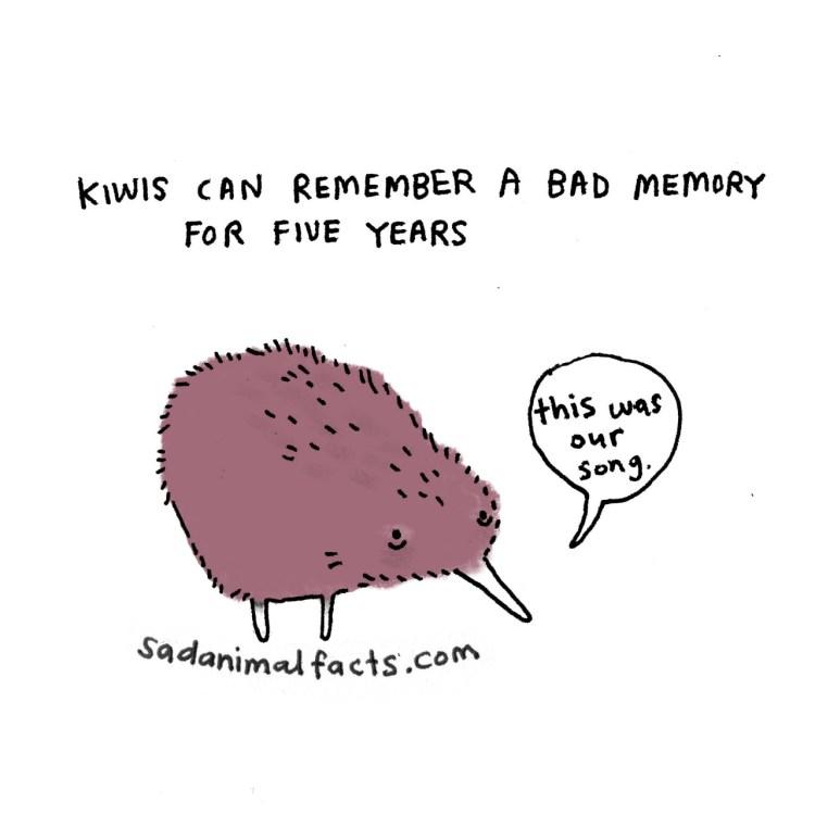 Sad-Animal-Facts-Kiwis