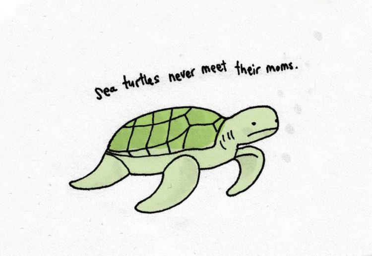 Sad-Animal-Facts-Turtles