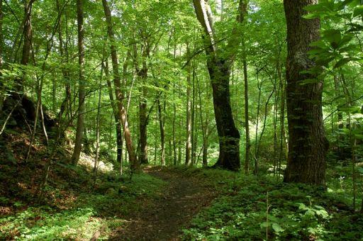 Cumberland Gap Trail