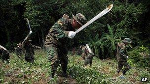 Bolivianske tropper skåret illegal coca planter, 16 Jan 2012