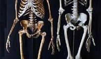 neanderthal muscular muscle apeman