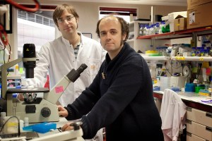 CNIO researchers Óscar Fernández-?Capetillo and Andrés Joaquín López-? Contreras. Credit:CNIO