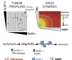 Targeting the DNA Repair Pathway in Ewing Sarcoma, Image credit: Cell Reports