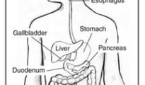 Diarrhea- digestive system