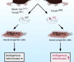 TRIM 28 retroviruses