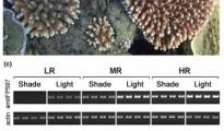 Image credit: Molecular ecology