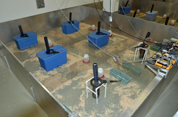 A 'mouse barn' such as the one shown here at the University of Utah is the heart of a new, sensitive toxicity test that allows house-type mice to compete in a seminatural environment so researchers can measure how exposure to sugar, medicines and other substances affects the mice in terms of their survival, reproduction and ability to hold territory. The blue tubs and green trays are nesting boxes, protected and unprotected, respectively. The feeding stations (vertical tubes) have sensor rings around them to detect transmitter chips implanted in male mice -- a way to determine which males hold which territories. Image Credit: Douglas Cornwall, University of Utah