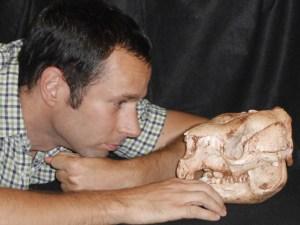 Dr Bastien Llamas with a skull of an extinct short-faced kangaroo (Simosthenurus occidentalis). Image credit: University of Adelaide