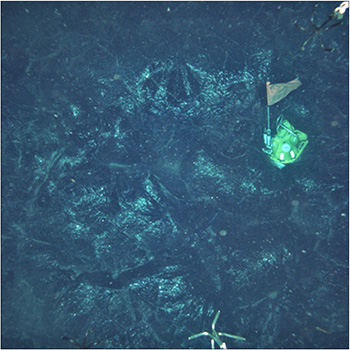 An ocean-bottom seismometer (sailboat-like object) was trapped amid erupting magma in 2006 at the East Pacific Rise. Such instruments are providing new insights into the timing of eruptions. (Dan Fornari/Woods Hole Oceanographic Institution)