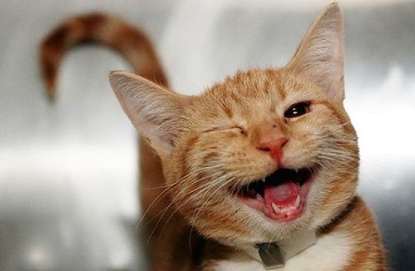 قط مبتسم