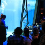 A naturalist at MOC narrates the divers' experience to a crowd of aquarium visitors. (Kathleen Ferraro/Medill)