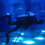 An MOC diver swims with the sharks and checks the tank and animals for any irregularities. (Kathleen Ferraro/Medill)