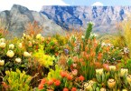 """حديقة كيرستن بوش النباتية، كيب تاون """"Kirstenbosch Botanical Garden"""""""