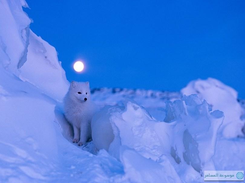 اجمل الصور في موسم الشتاء %D9%83%D9%86%D8%AF%D