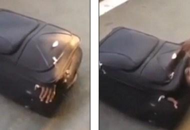 مسافر داخل الحقيبة