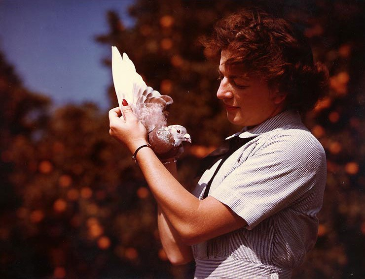Carrier pigeon trainer WAVES Specialist 2nd Class Marcelle Whiteman holding a carrier pigeon, Naval Air Station, Santa Ana, California, United States, June 1945. National Archives Photo