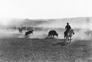 Cowboys on cattle drive